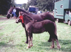 Greenholme Kitty and foal Tarnbeck Raven